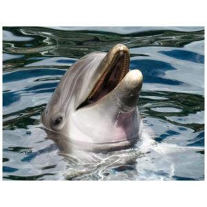 Dolfijn lacht