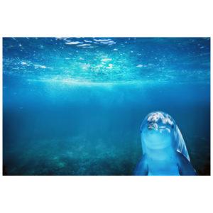 Dolfijn onder water