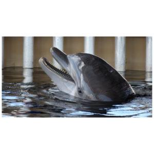Dolfijn zingt