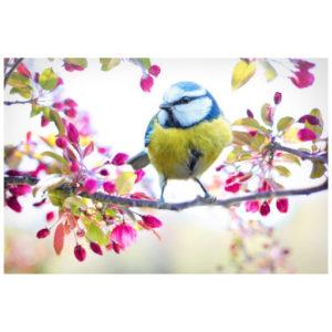 Een vogel in de lente