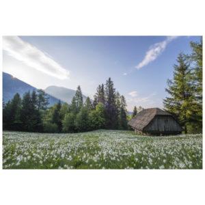 Hut in lenteweide