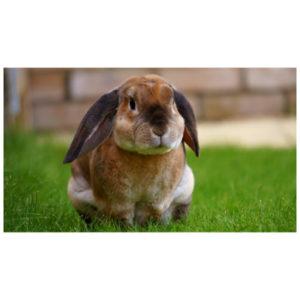 Leuk konijn